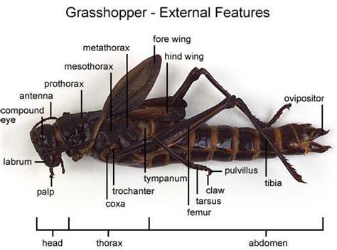 trachiata arthropod flashcards  proprofs