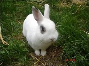Weißer Wurm Katze : vermisst gefunden ~ Markanthonyermac.com Haus und Dekorationen