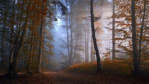Path in Misty Autumn Forest Full HD Wallpaper and ...