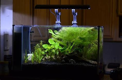 Fluval Spec Aquascape by Fluval Spec V Idea Aquascaping Aquarium Nano Aquarium