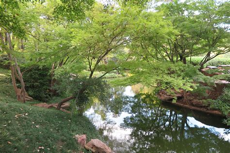 Our Urban Forest: The Threats & Benefits - Blog ...