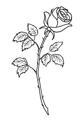 Royalty Free Stock Photo Images, Pictures, Graphics and Illustrations | Single rose tattoos