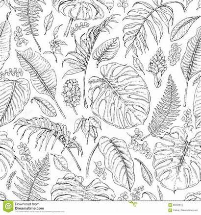 Tropical Plants Pattern Leaves Sketch Monstera Drawn