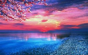 Sun sea trees water pink blue nature | Samsung Wallpapers ...