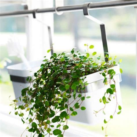 1000 id 233 es sur le th 232 me jardins d herbes suspendus sur herbes aromatiques herbes d
