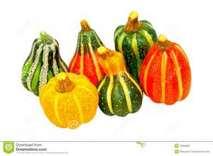 Types Of Pumpkins Pictures pumpkin gourds isolated stock image image 15665991