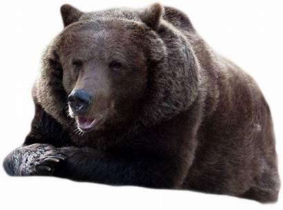 Bear Transparent Background Check