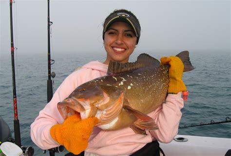 grouper florida morio epinephelus catch