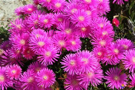 plante grasse fleur plante grasse fleur bricolage maison et d 233 coration
