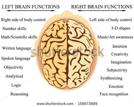 Left Hemisphere Brain Functions