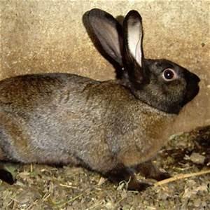 Восстановление печени кроликов