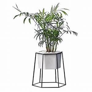 Pflanzen Zum Aufhängen : pflanzen und andere gartenausstattung von fastar online ~ Michelbontemps.com Haus und Dekorationen