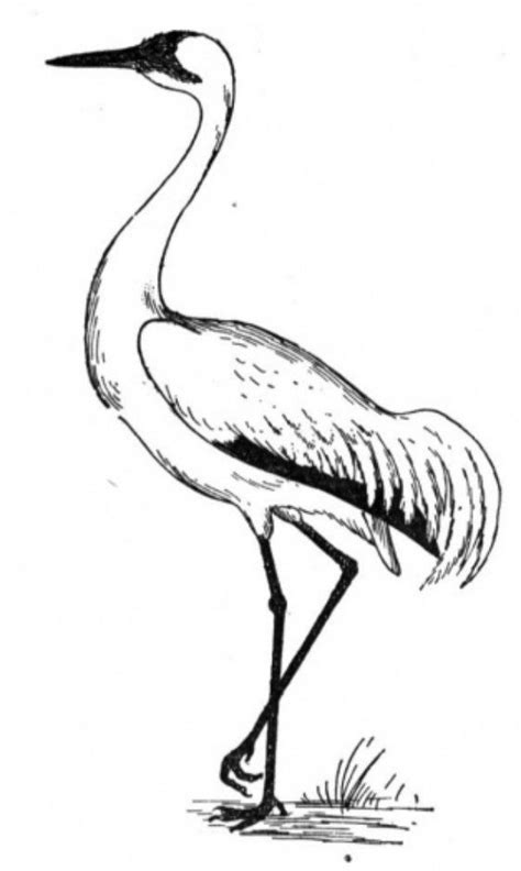 Crane Bird Coloring Pages for Kids | Bird coloring pages