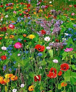 prairie fleurie au jardin pinterest les voisins With tapis champ de fleurs avec canapé gonflable extérieur