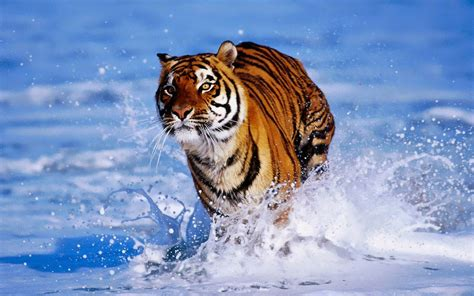 Free Amazing Animal Wallpapers - house of wallpapers free high definition