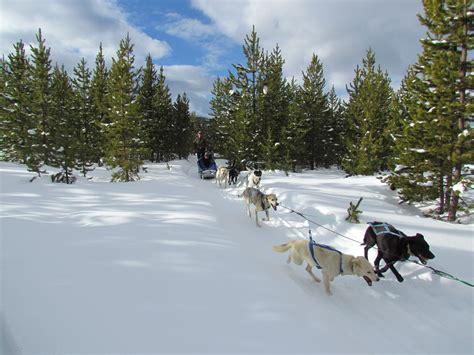 luxury winter vacation to montana wolf safari