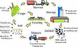Major Nitrogen Flows In Animal Production Within The Farm And Between