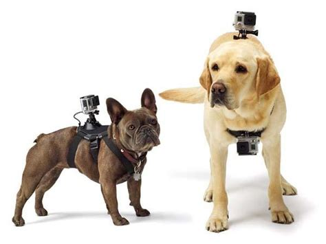 GoPro Fetch Dog Harness for Your Dogs | Gadgetsin