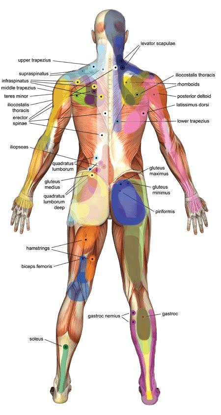 healing benefits  pressure point massage healdove