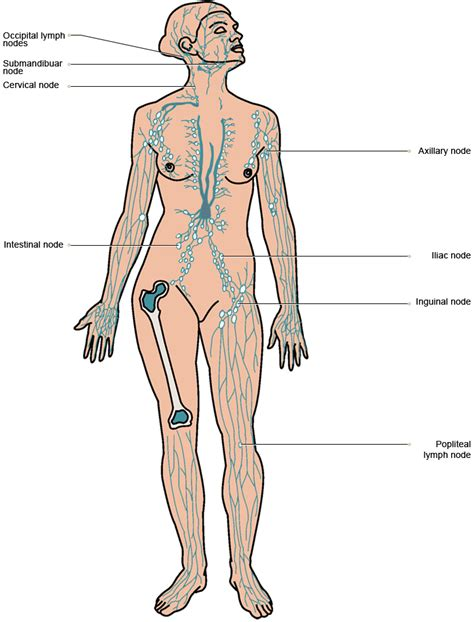 vtct location   lymph nodes   body