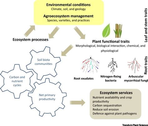 plant functional traits soil  ecosystem services