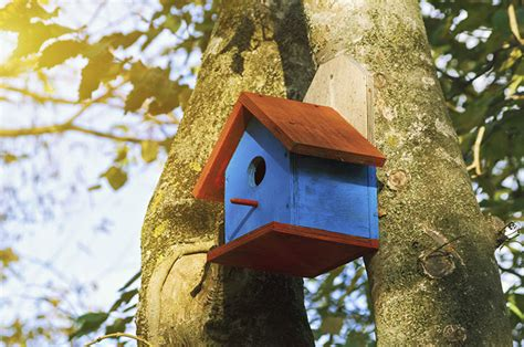 canadian wildlife federation there are so many birdhouses
