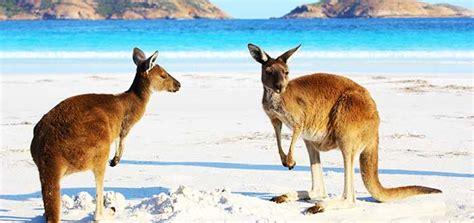 animales de australia  te encantara conocer