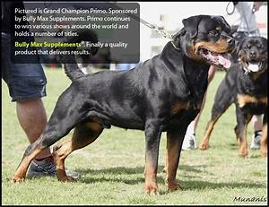 Rottweiler Supplements that Build Muscle!