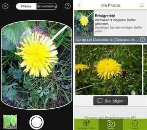 Blumen Erkennen App : pflanzen und blumen mit dem iphone bestimmen per app ~ Eleganceandgraceweddings.com Haus und Dekorationen
