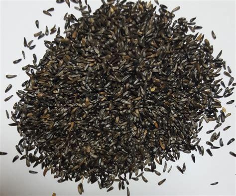 niger seed ethiopian niger seeds buy niger seeds product on alibaba com