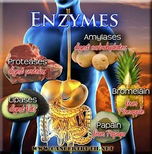 1000  Images About Enzyme Rich Foods On Pinterest
