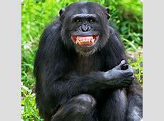 Tierisch lustig Humor bei Tieren