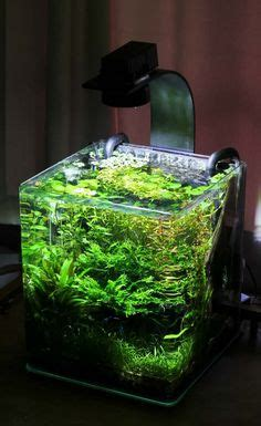 andrew s 2nd tank planted spec 2 tank boraras maculatus tigers arrived d page 3