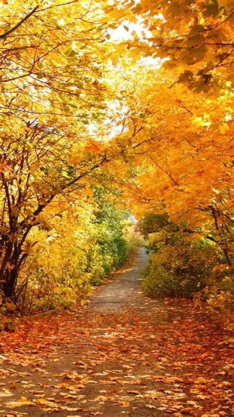 Autumn Season Wallpapers For Phone by Autumn Phone Wallpaper Wallpapersafari