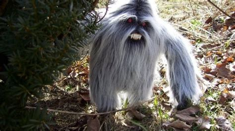yeti sightings reported russia   expedition