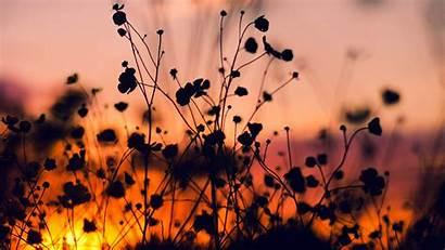 Dark Shadow Flower Nature Sunset Wallpapers Desktop