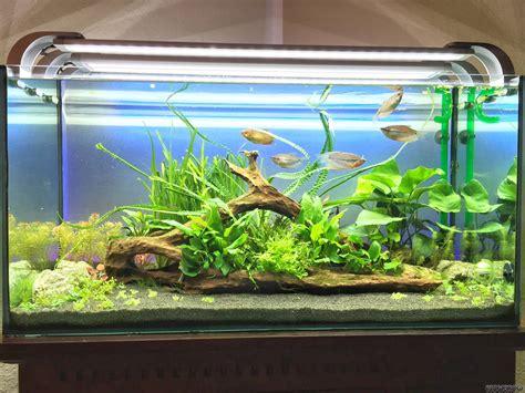 der kraken flowgrow aquascapeaquarien datenbank