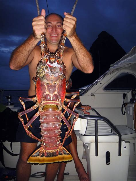 giant lobster catch yachting world
