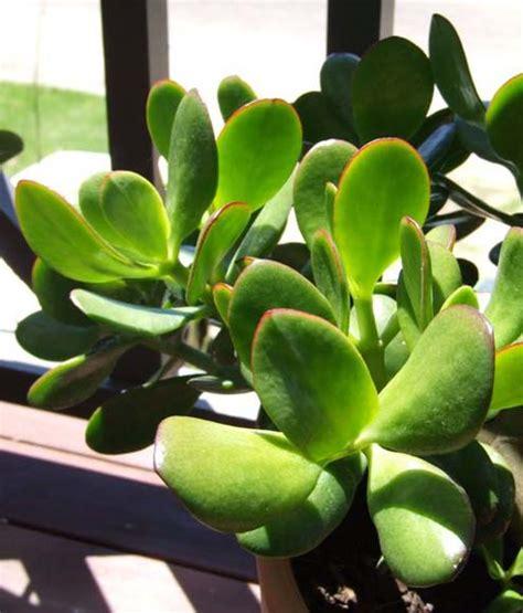 plante dans la chambre plantes dépolluantes sur greenpouce com