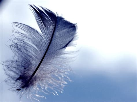 feather background feather wallpapers hd