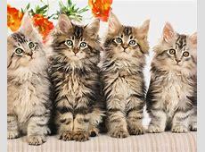 Vier süße kleine Katze 1920x1080 Full HD 2K
