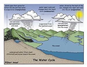 Sunnyland 4th Grade!: The Water Cycle