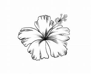 hibiscus tattoo black and white | Wallpaper Pictures