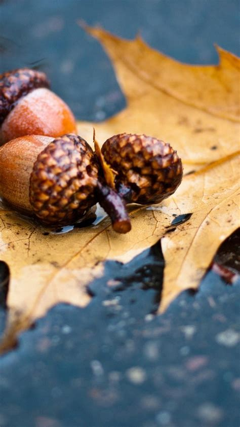 nature rain leaves wet acorns macro ground autumn