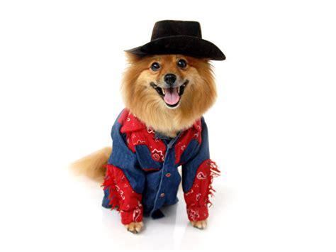 wallpapers spitz dogs cowboy hat uniform animals
