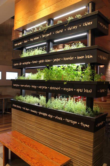 Vertical Herb Garden In Your Kitchen by Vertical Herb Garden Lyfe Kitchen Restaurant In Palo