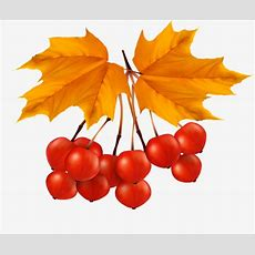 Red Fruit, Fruit Clipart, Maple Leaf, Fruit Png Image And