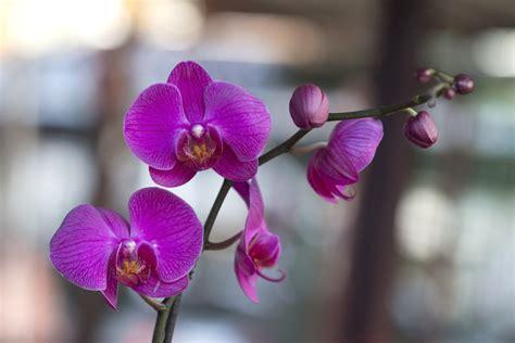 entretien d une orchidee great orchide racines with entretien d une orchidee orchide