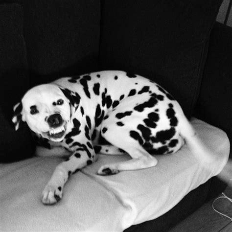 hilarious dog jokes  pup parents   barkpost