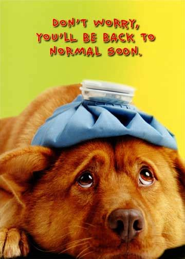 dog   normal funny humorous   card